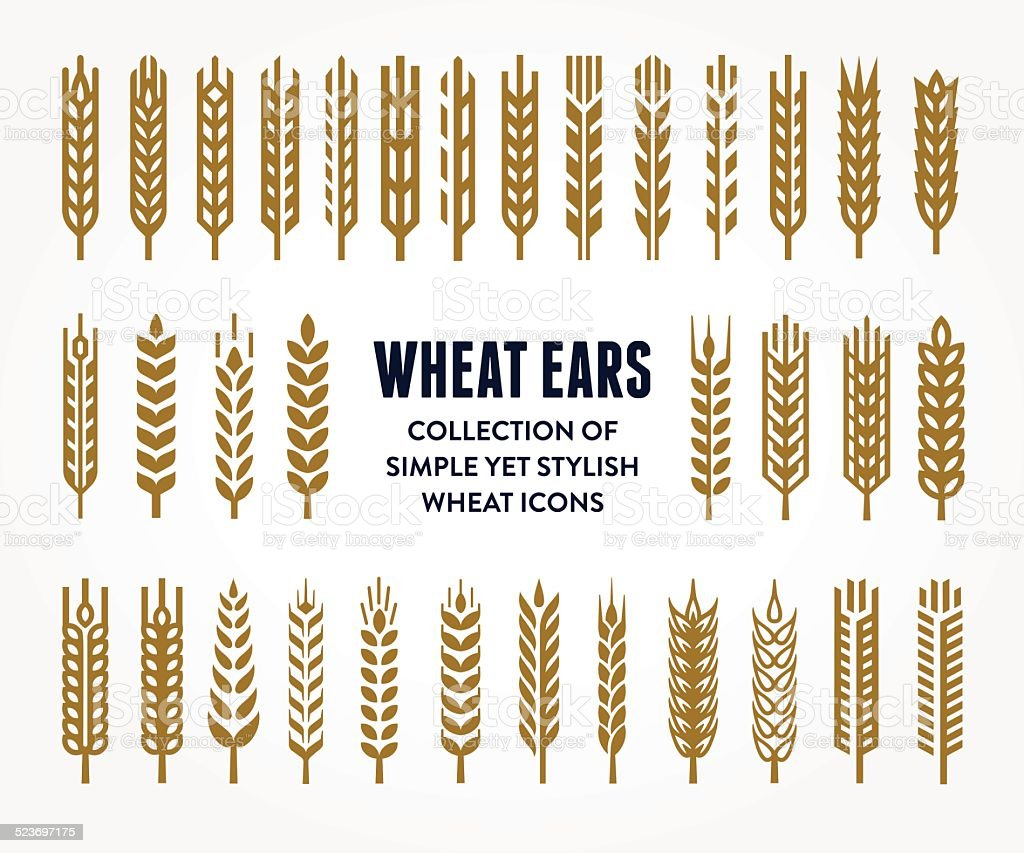 Set of Wheat Ears icons vector art illustration