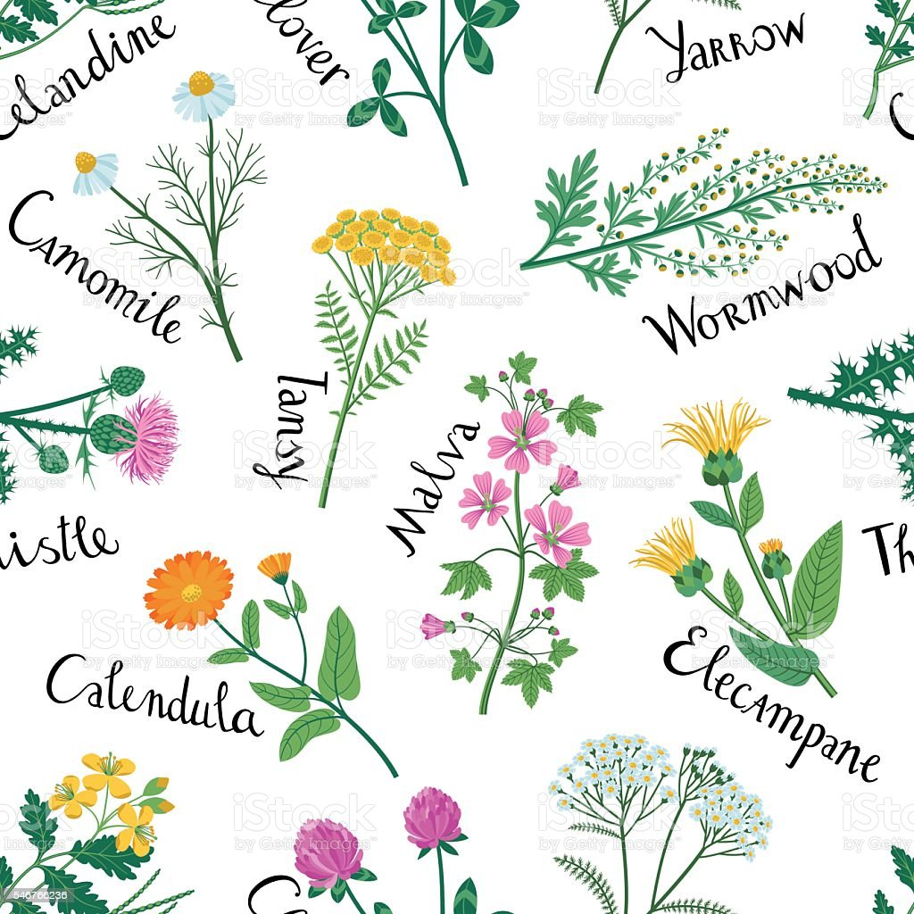 Set of Wild Herbs are used in Medicine. Seamless Pattern. vector art illustration