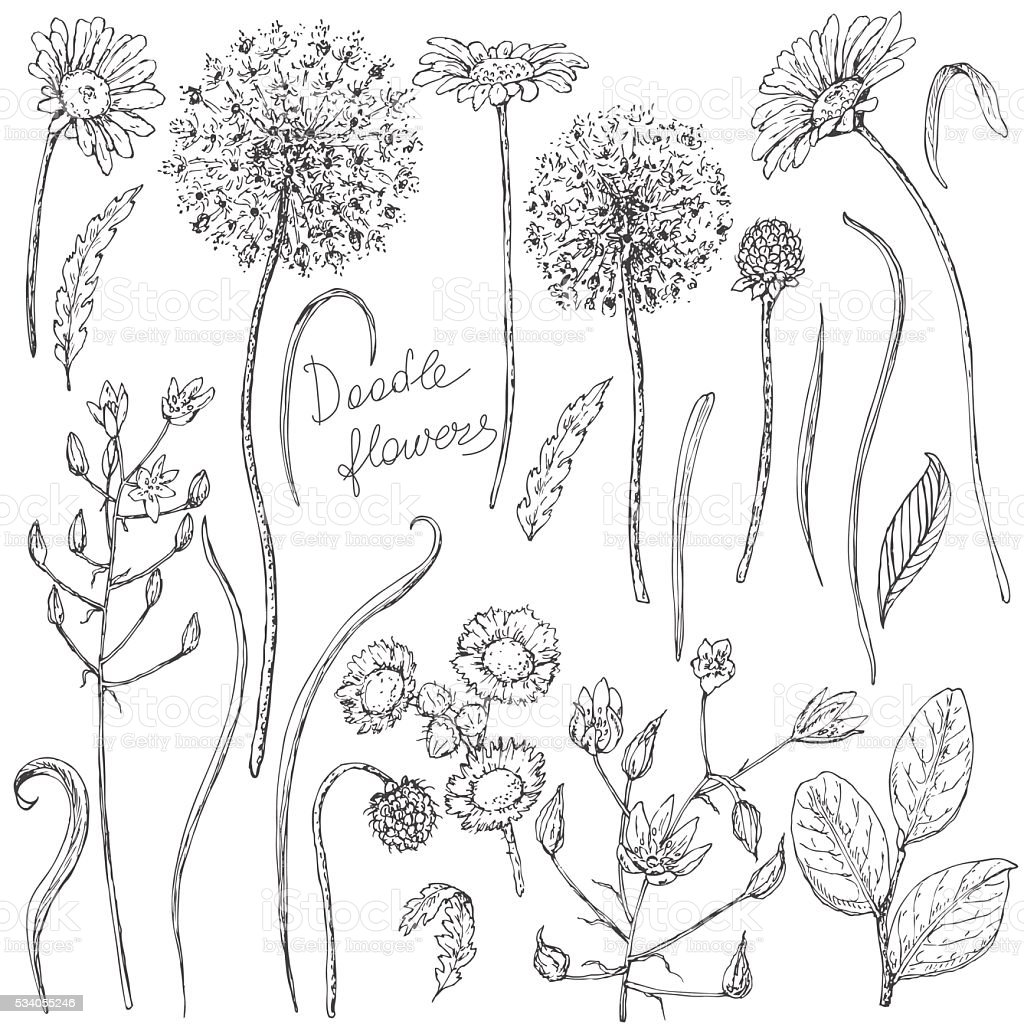 Set of wildflowers  and leaves sketch vector art illustration