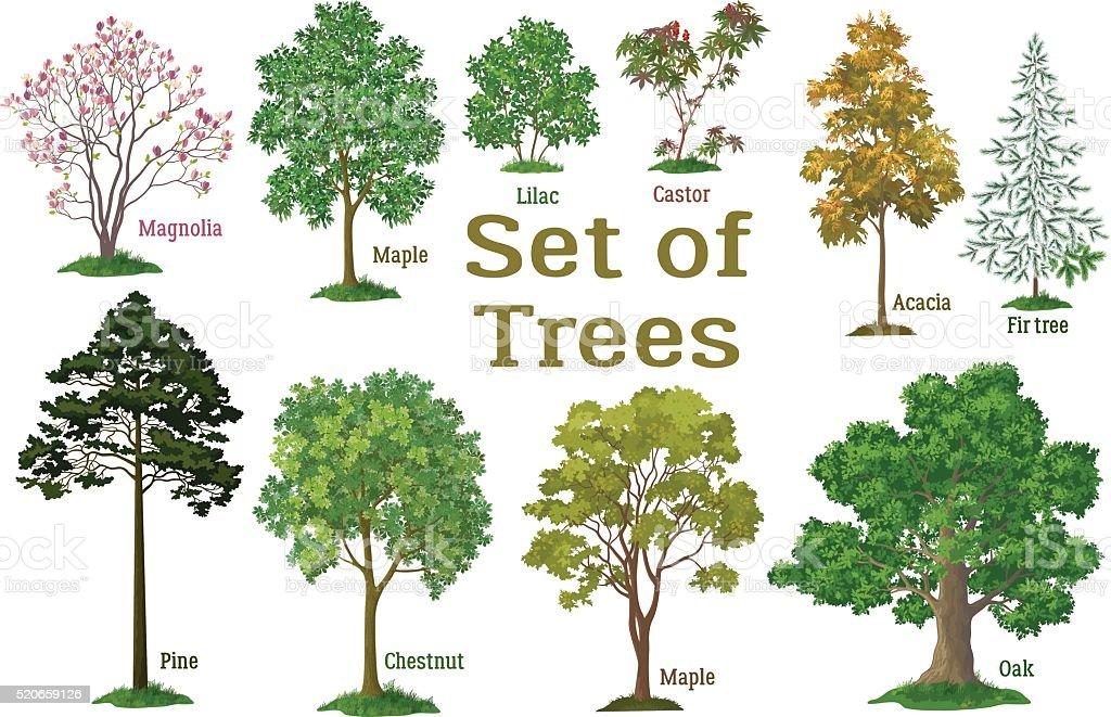 Set Plants, Trees and Bushes vector art illustration