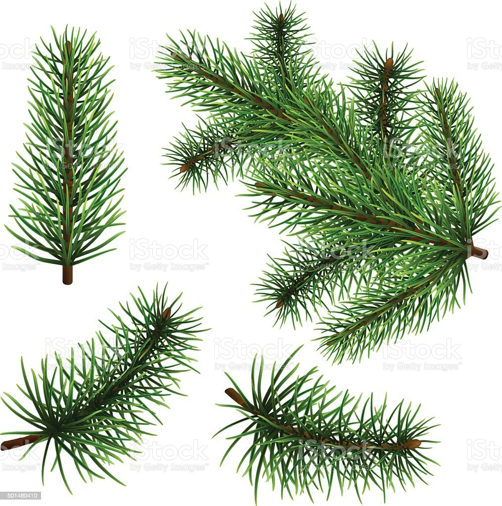 Set realistic fir branches vector art illustration