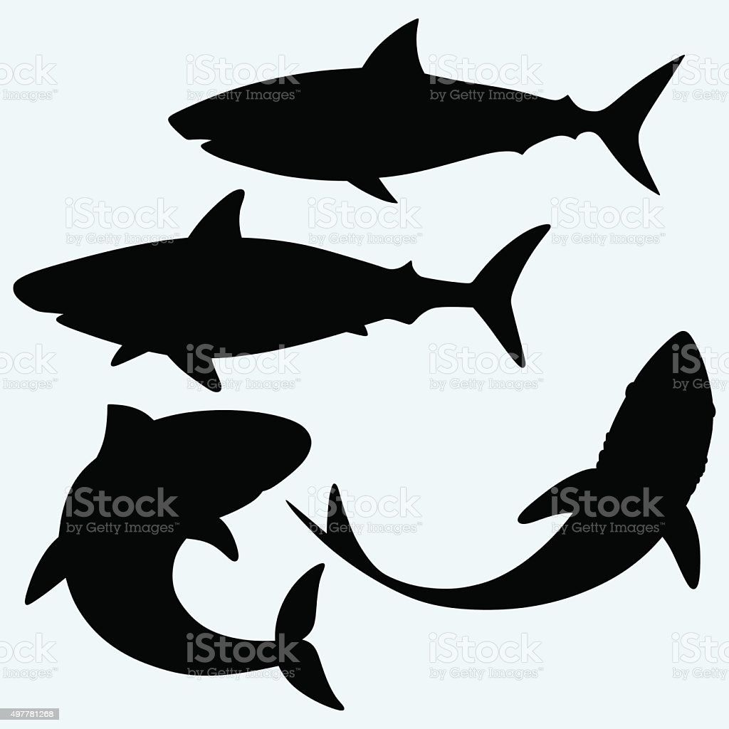 Set shark vector art illustration
