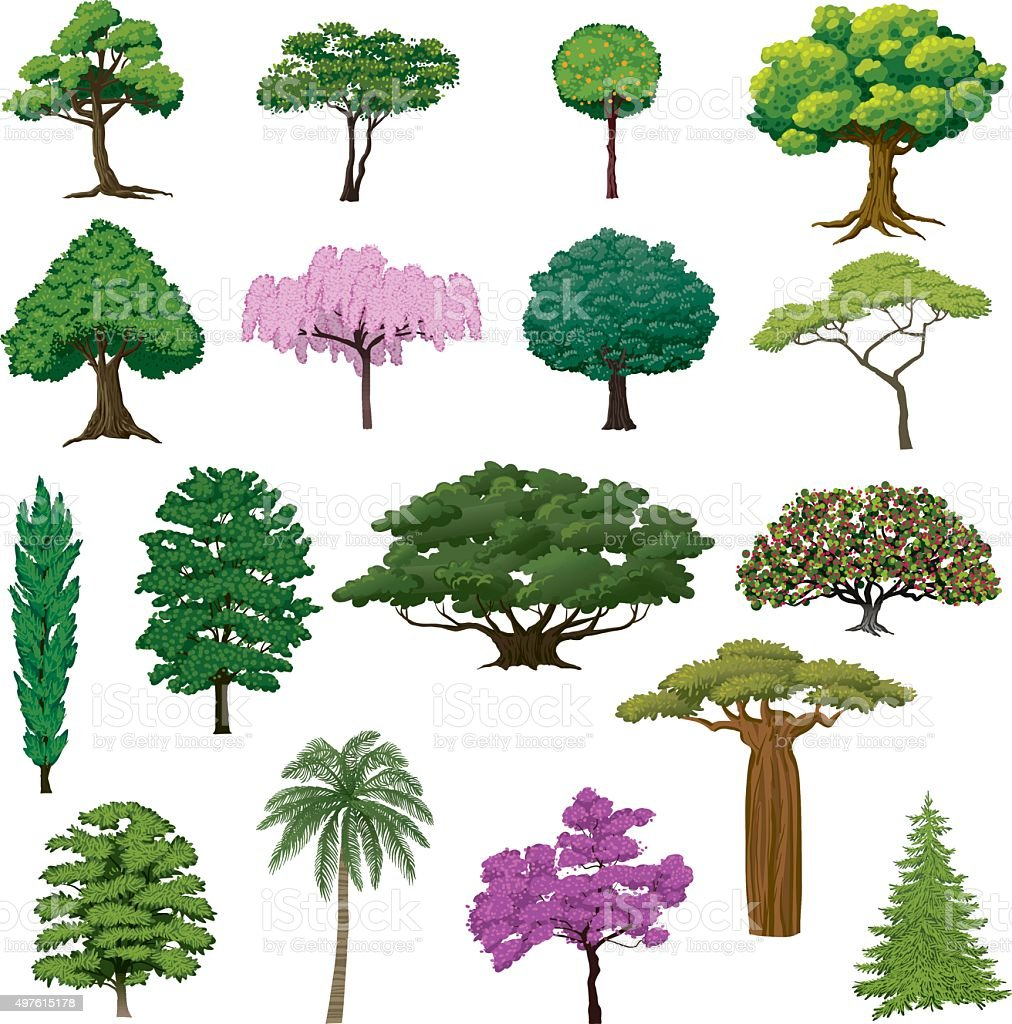 Set Sightly Trees vector art illustration