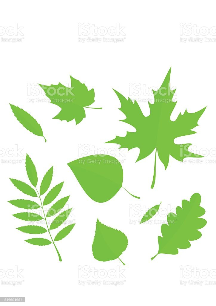 Set Spring Leaves in flat style isolated on white background. vector art illustration