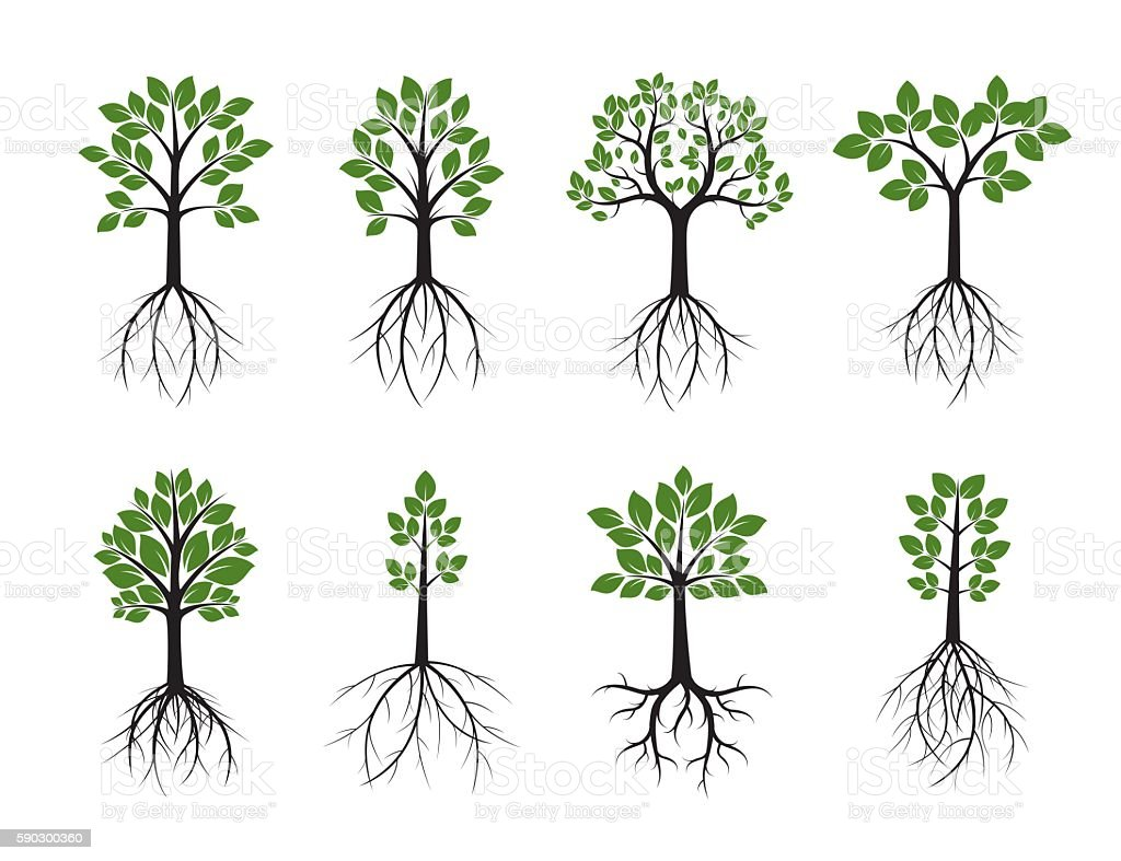 Set Trees and Roots. Vector Illustration. vector art illustration
