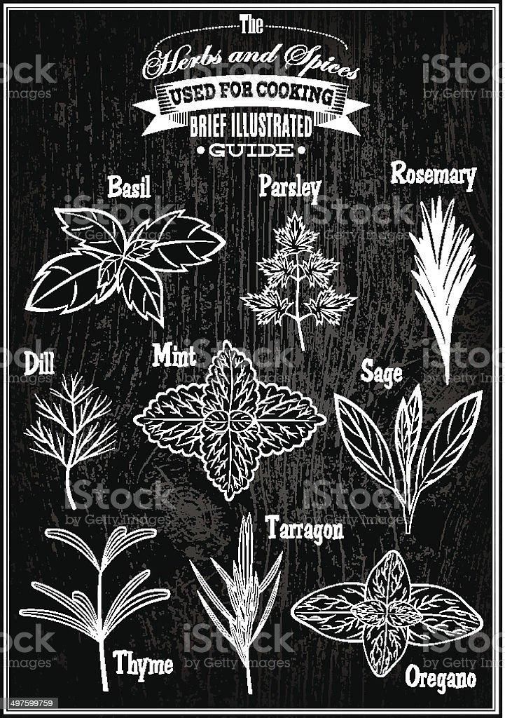 set vector images plant herbs for cooking royalty-free stock vector art