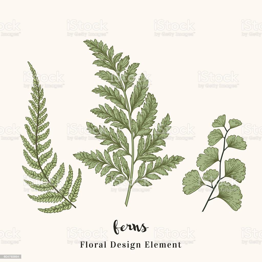 Set with ferns. vector art illustration