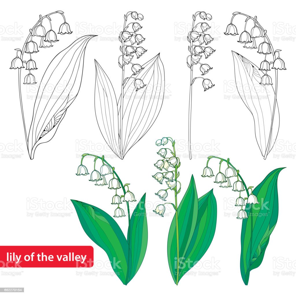 Set with Lily of the valley or Convallaria isolated on white. vector art illustration