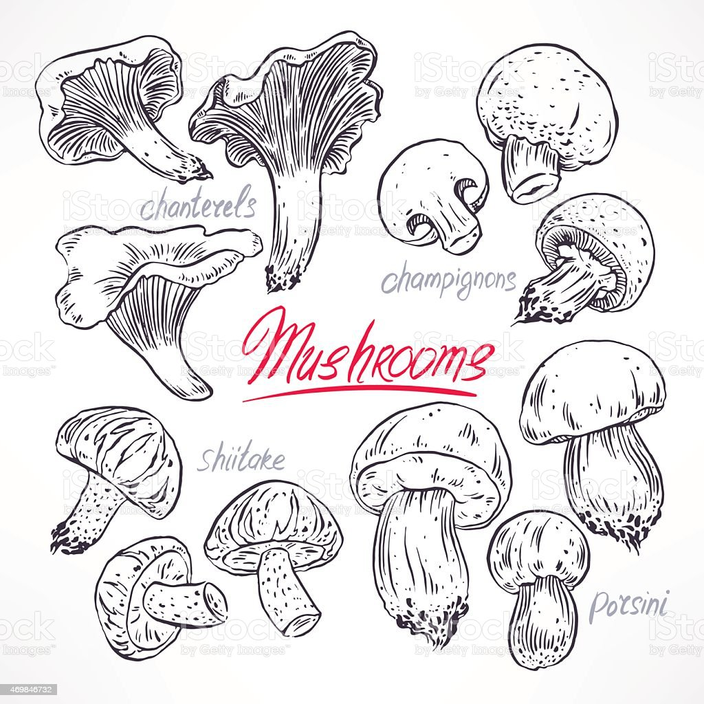 set with sketch mushrooms vector art illustration