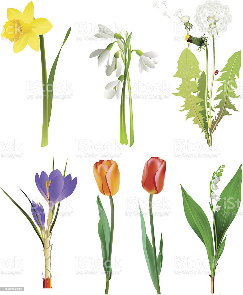 Seven different flowers on a white background royalty-free stock vector art