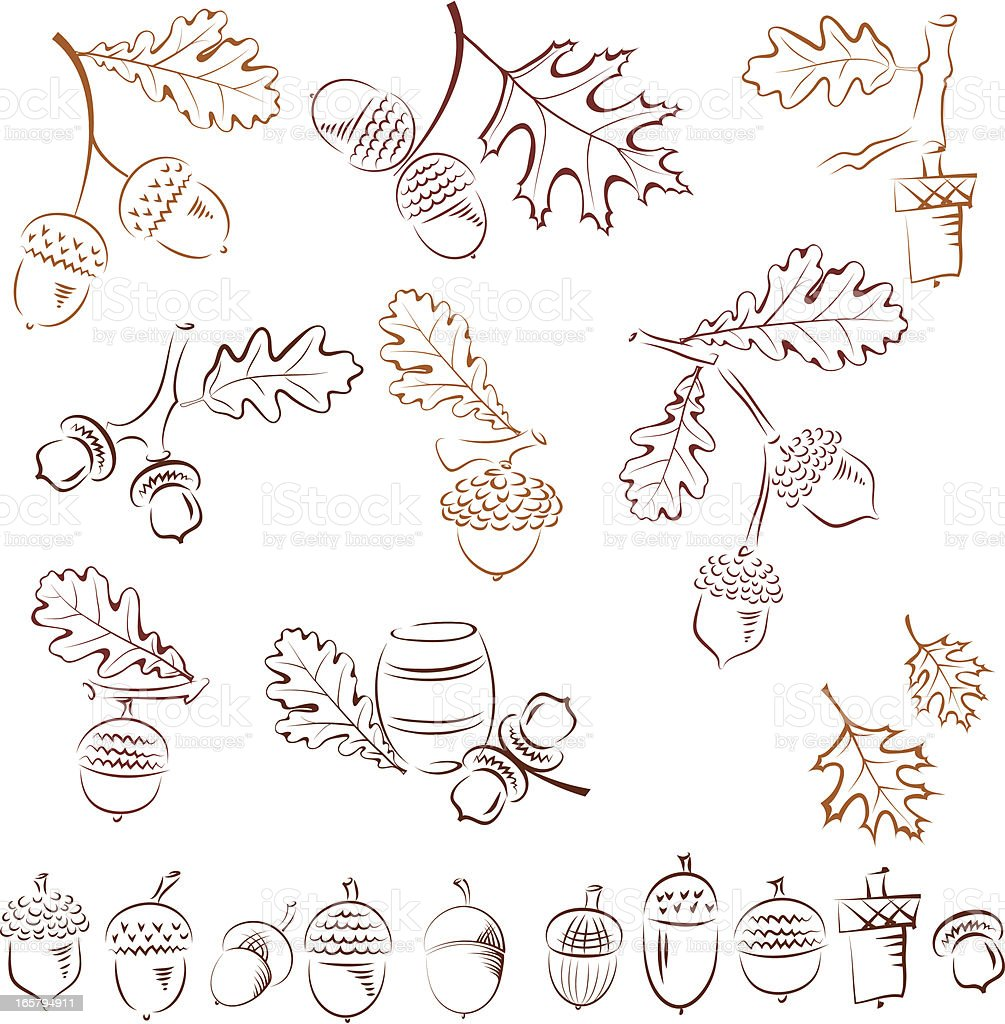 Several drawings of acorns with fall leaves royalty-free stock vector art