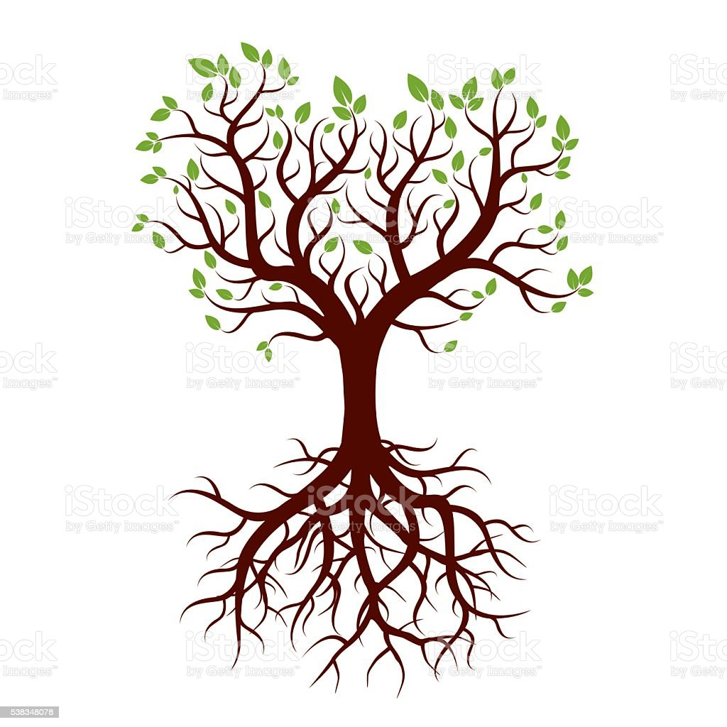 Shape of Tree, Roots and Green Leafs. Vector Illustration. vector art illustration