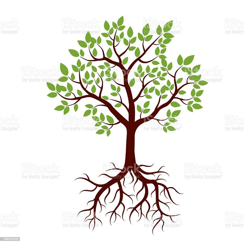 Silhouette Der Baum Und Wurzeln Und Grün Leafs Vektorillustration Vektor  Illustration