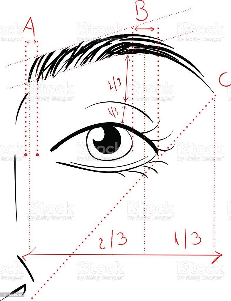 Shaping The Eyebrows vector art illustration