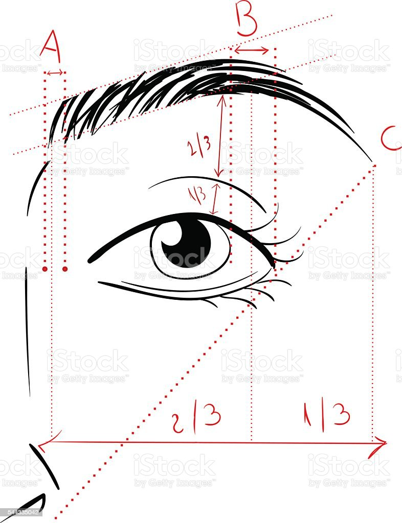 Shaping The Eyebrows vector art illustration