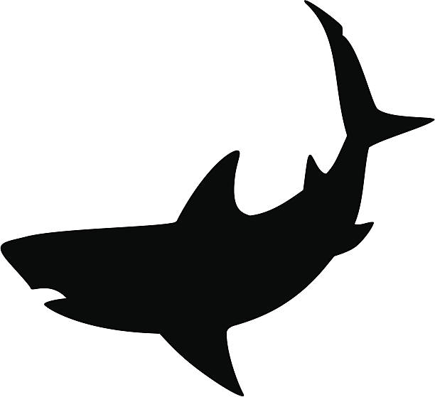 Shark Clip Art, Vector Images & Illustrations - iStock