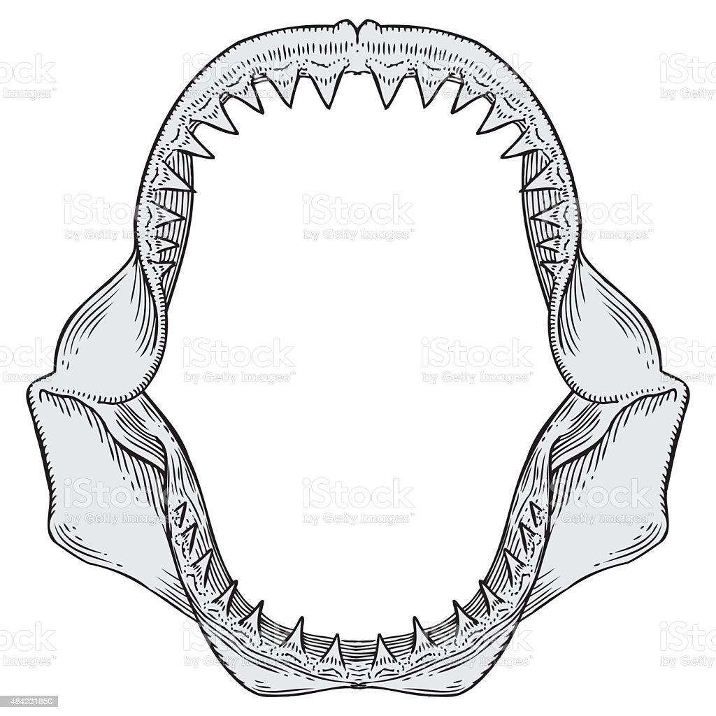 Shark Jaws Illustration vector art illustration
