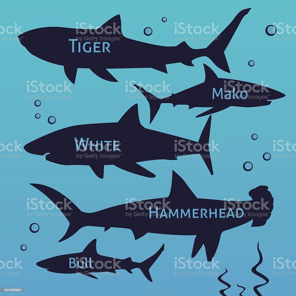 Shark vector silhouettes set. Sea fish, animal swimming, fauna illustration vector art illustration