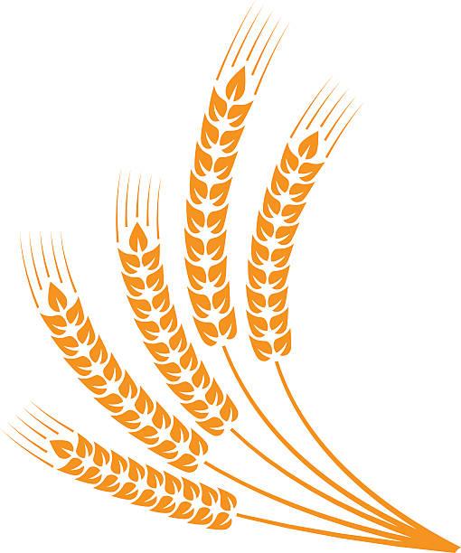 Barley Clip Art, Vector Images & Illustrations - iStock