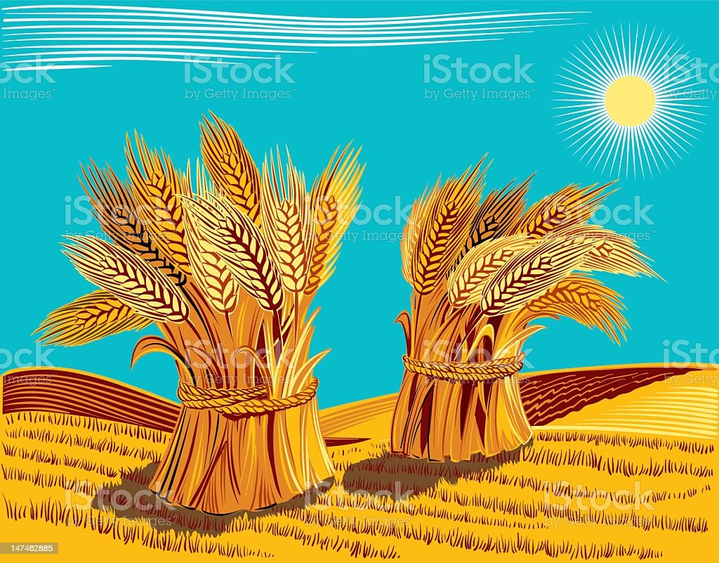 Sheaves of wheat royalty-free stock vector art