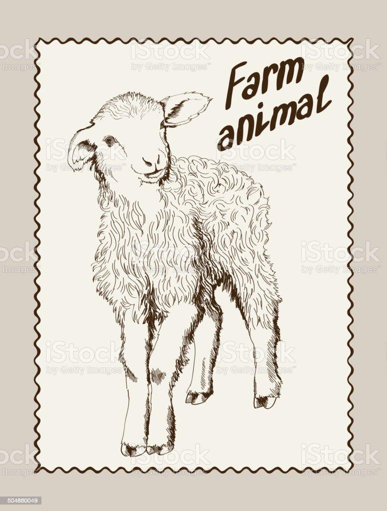 sheep breeding vector art illustration