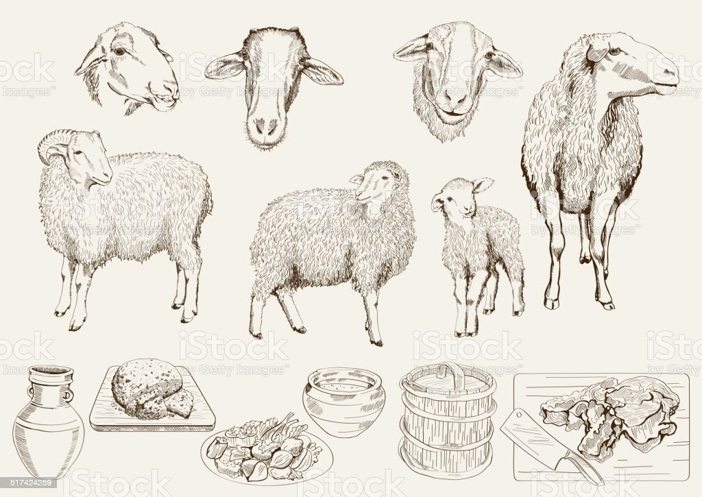 sheep breeding vector art illustration