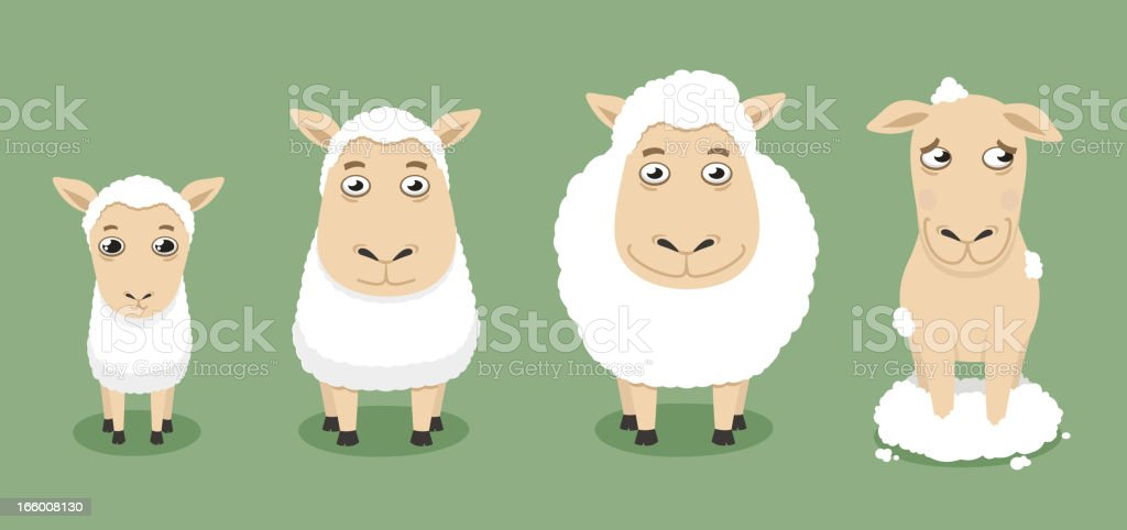 Sheep through time vector art illustration
