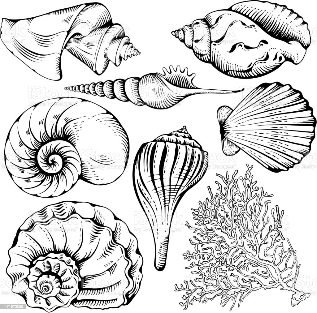 Shell set vector art illustration