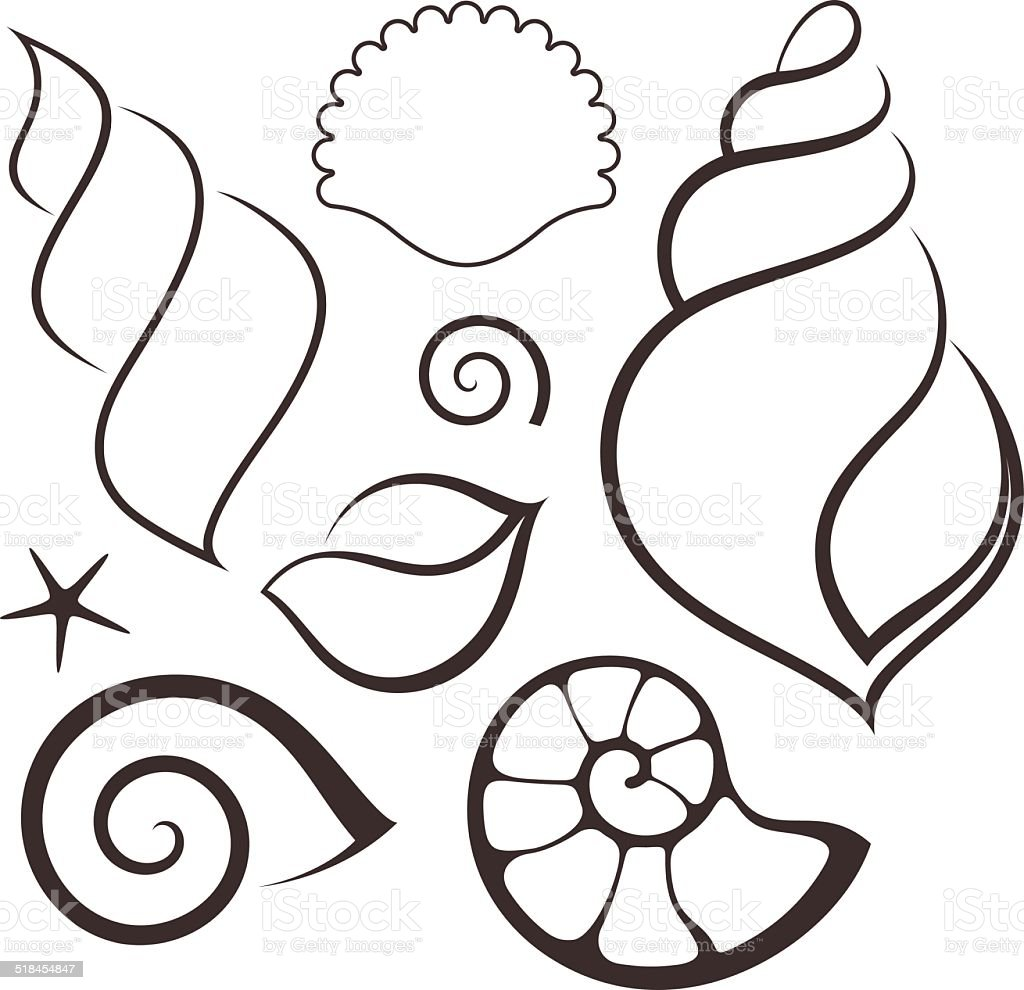 Shell. Set vector art illustration