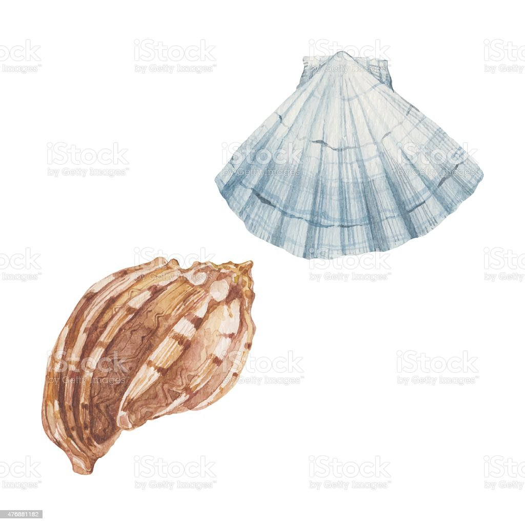 Shells isolated on white background. Vector, watercolor  illustration. vector art illustration