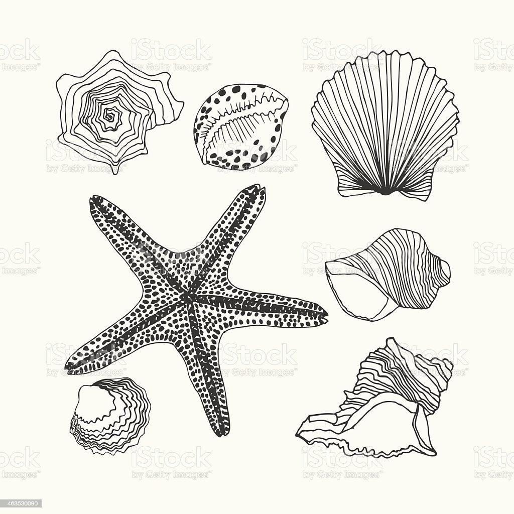 Shells set vector art illustration