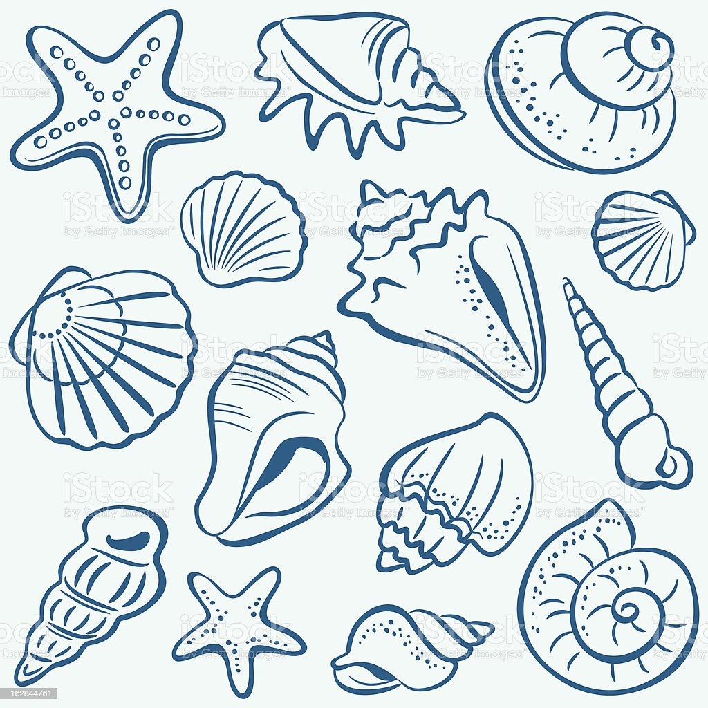 Shells vector art illustration
