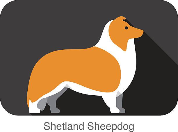 Shetland Sheepdog Clip Art, Vector Images & Illustrations - iStock