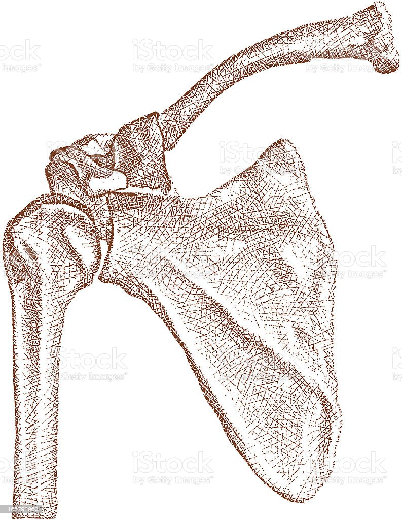 Shoulder Joint with Bones vector art illustration