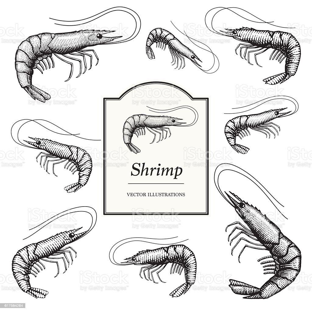 Shrimp (Prawn) Illustrations vector art illustration