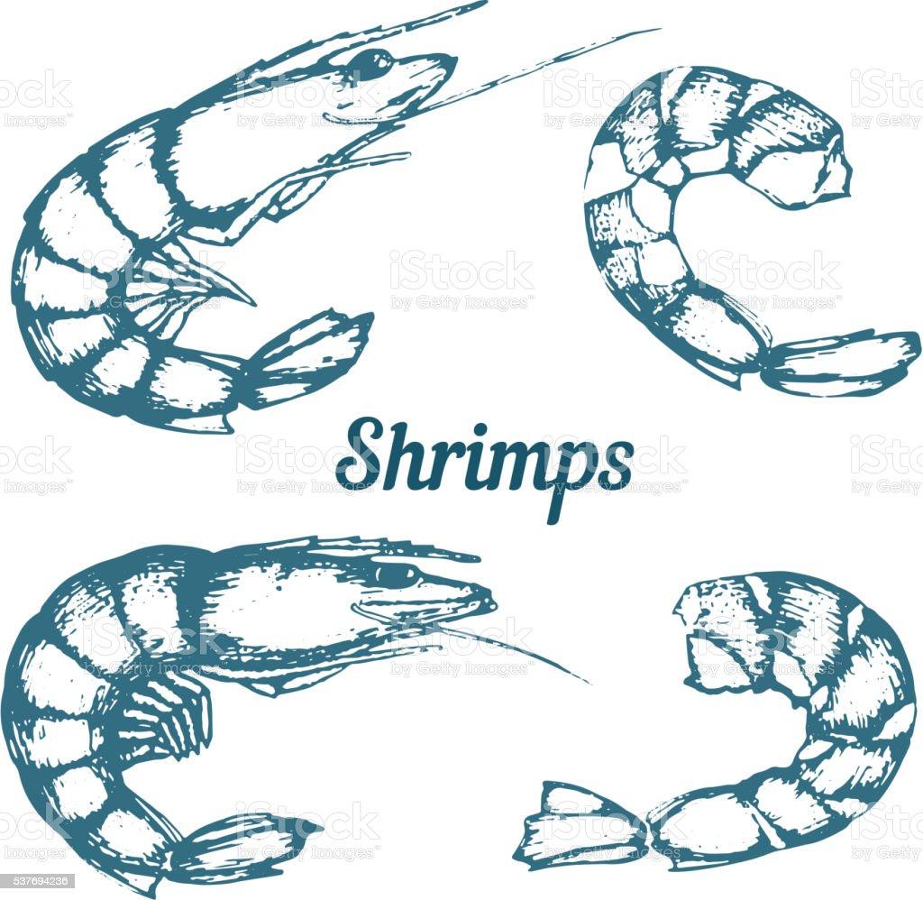 Shrimps vector art illustration