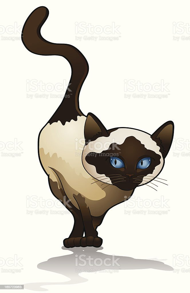 Siamese cat vector art illustration