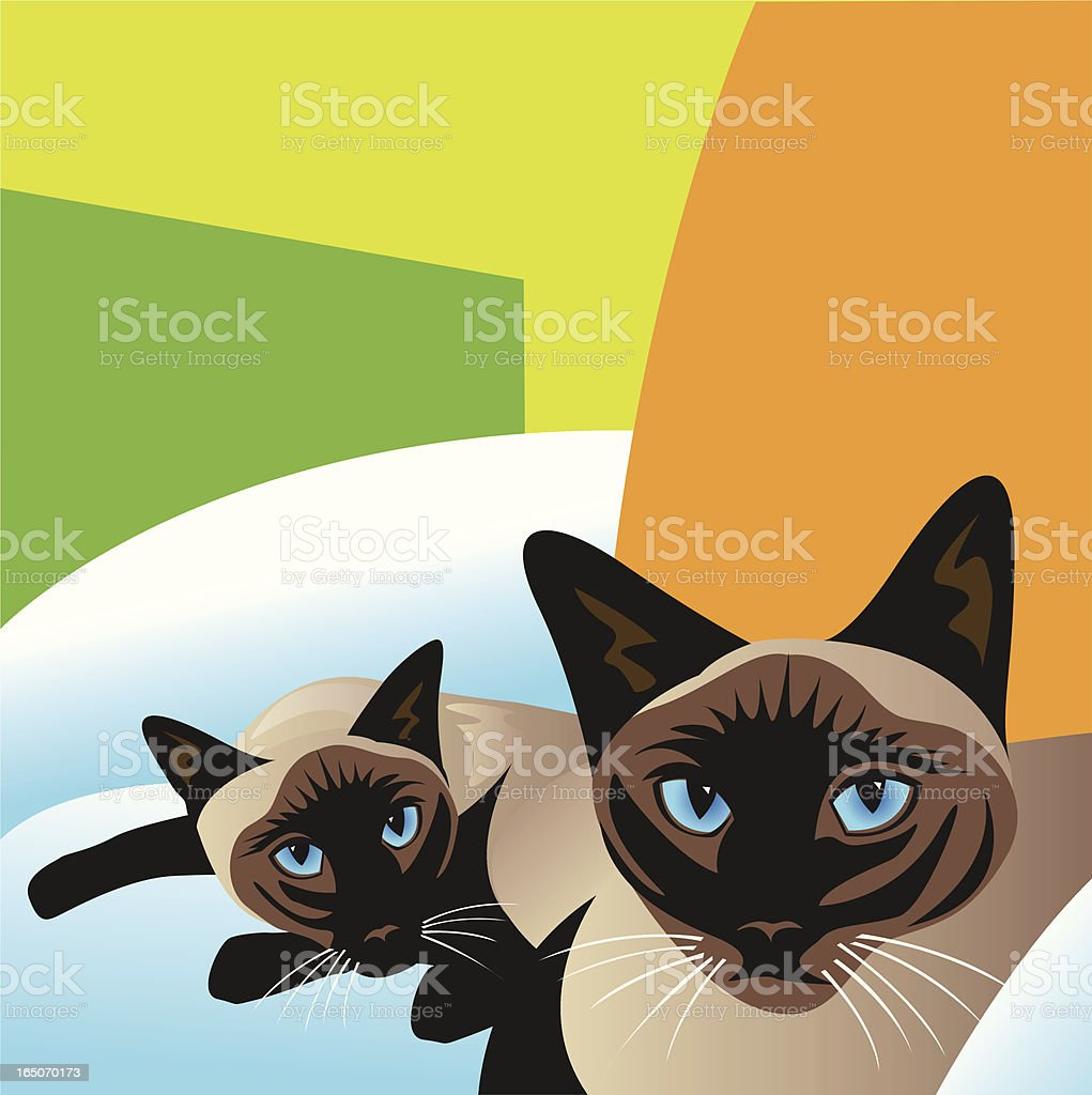 Siamese Cats vector art illustration