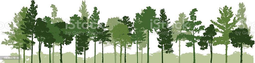 Siberian Pine forest vector art illustration