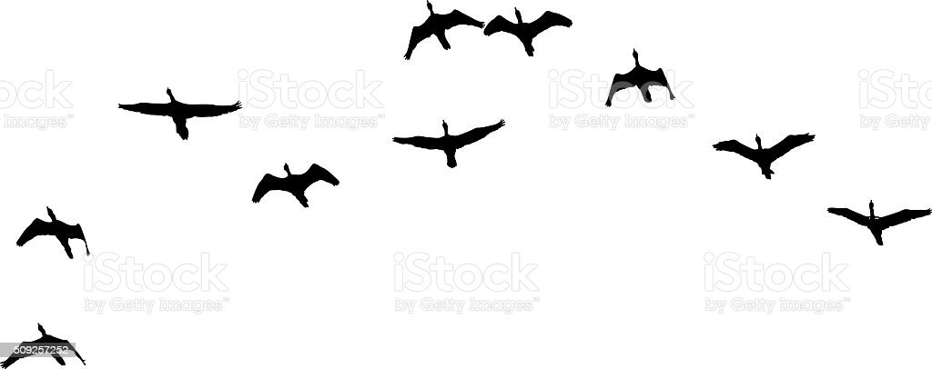 Silhouette Flock of Birds Flying. Isolated on White vector art illustration