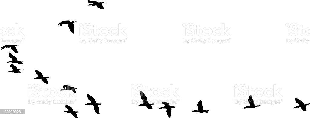 Silhouette Flock of Birds Flying. Isolated on White vector art illustration