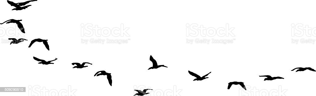 Silhouette Flock of Sea Birds Flying. Isolated on White vector art illustration