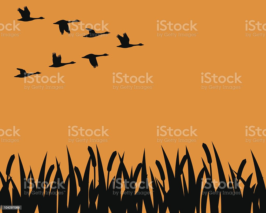 Silhouette geese and marsh vector art illustration