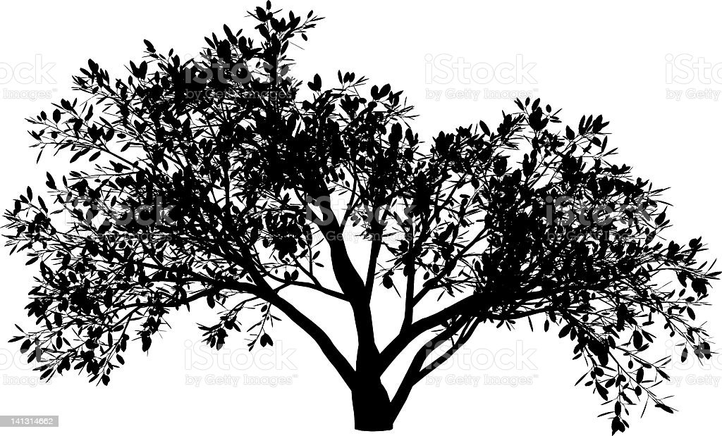 A silhouette of a magnolia tree vector art illustration