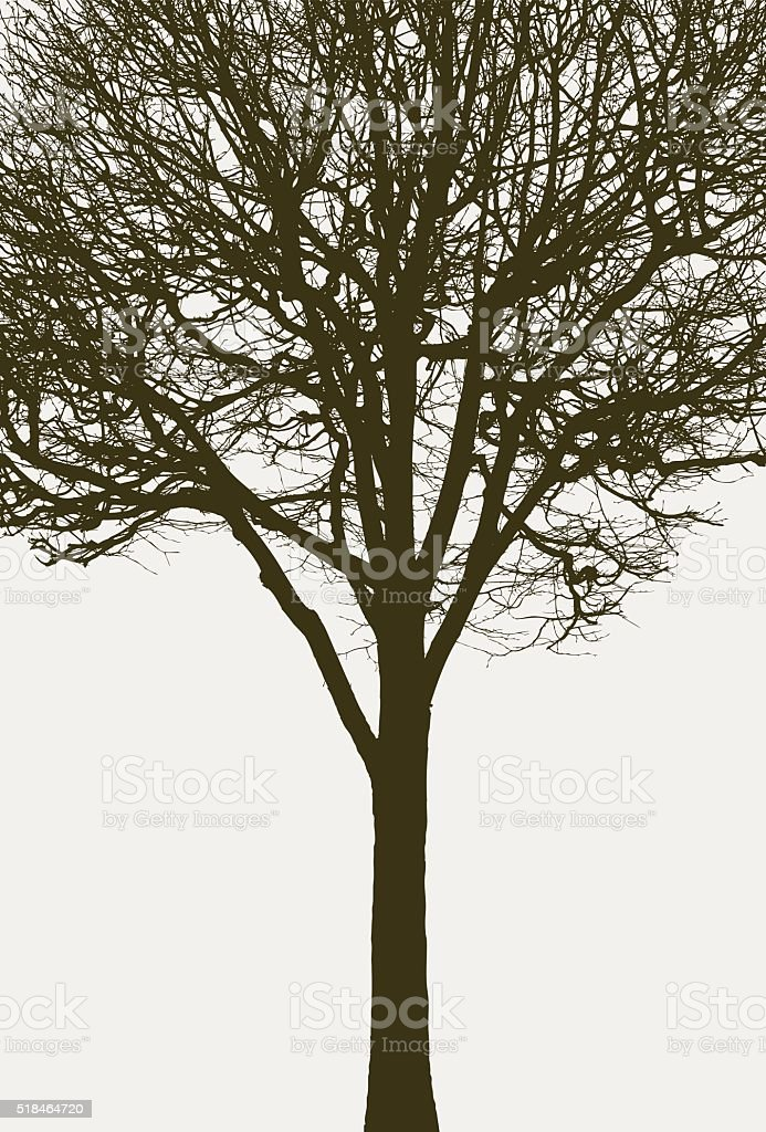 Silhouette of a tree without leaves vector art illustration