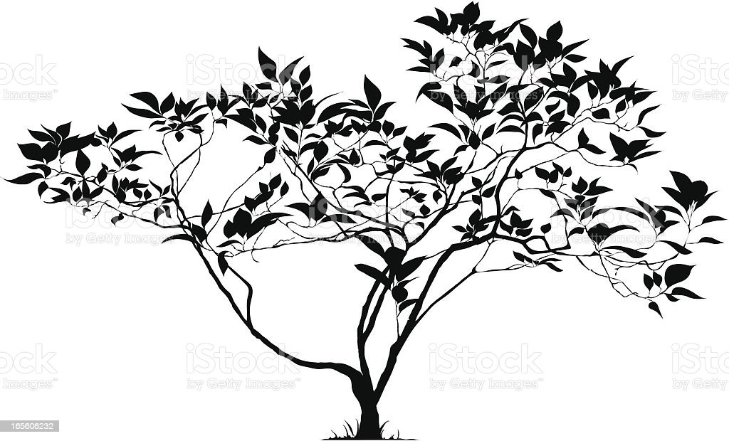 Silhouette of a young tree royalty-free stock vector art