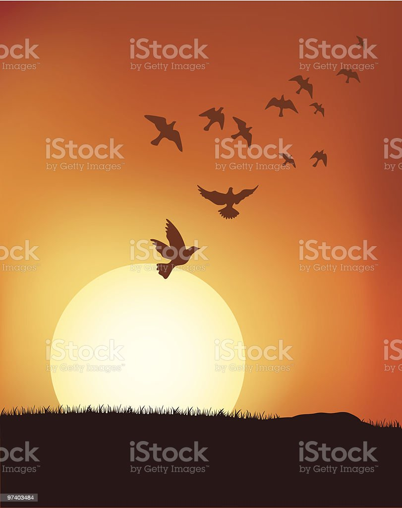 Silhouette of birds flying with sunrise background vector art illustration