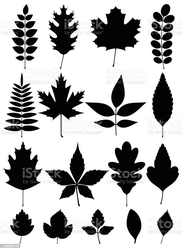 silhouette of different leaves vector art illustration