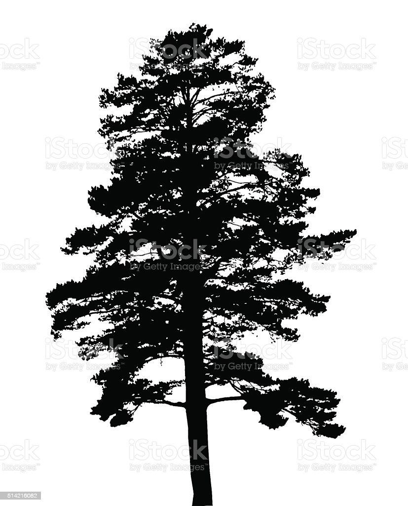 Silhouette of fir tree vector art illustration