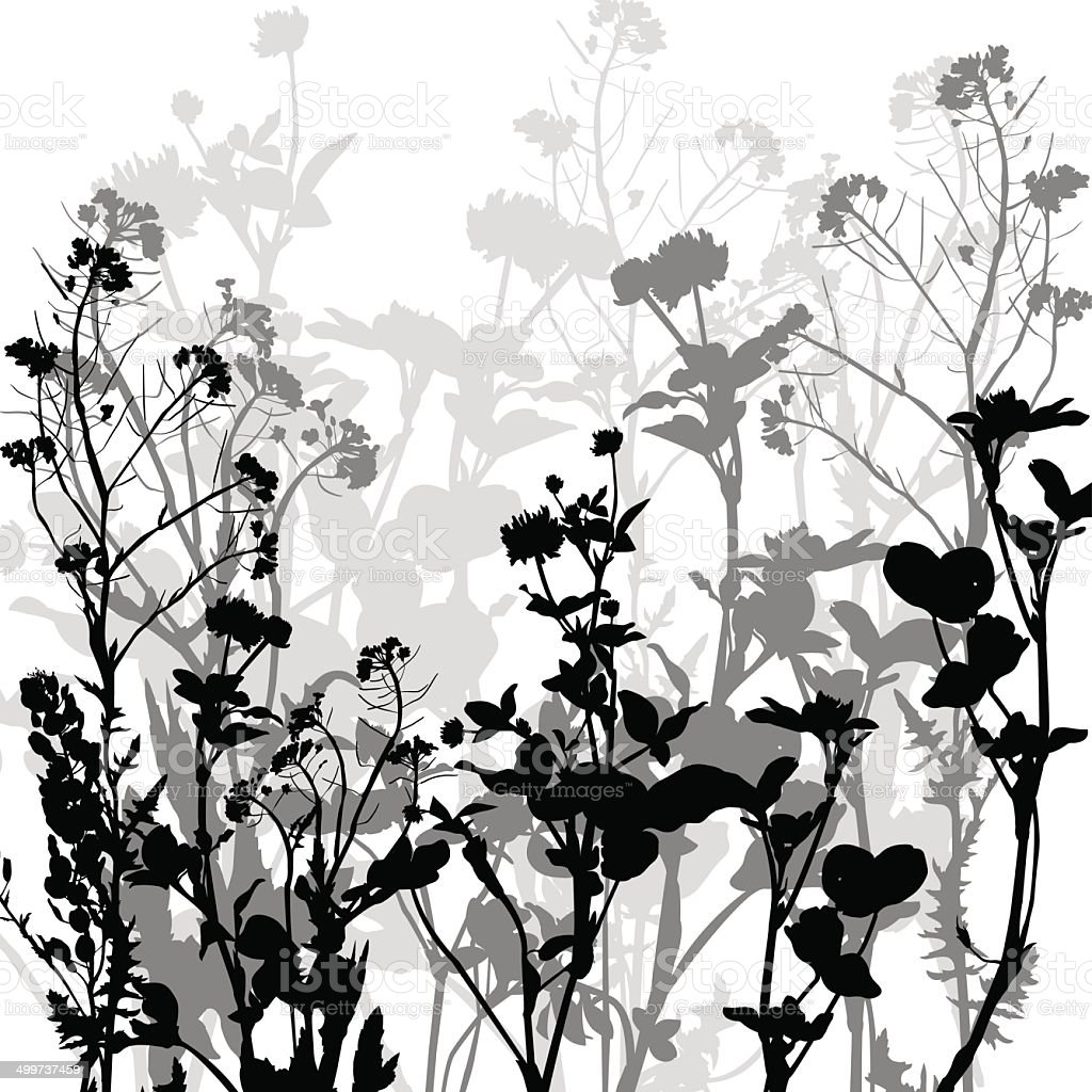Silhouette of herbs and flowers vector art illustration